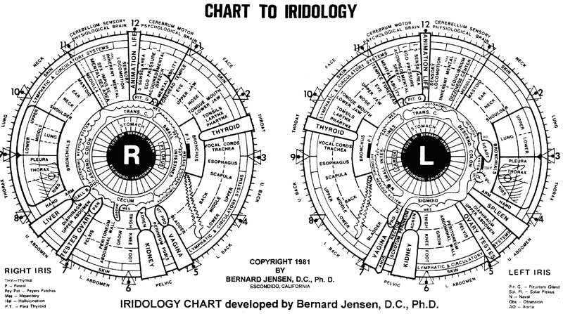 Iridology Chart Right Eye Morenpulsar